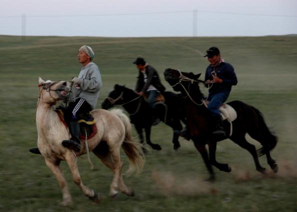 Small horses blur